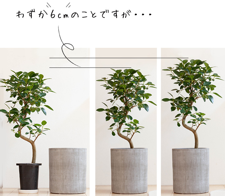植木鉢7号