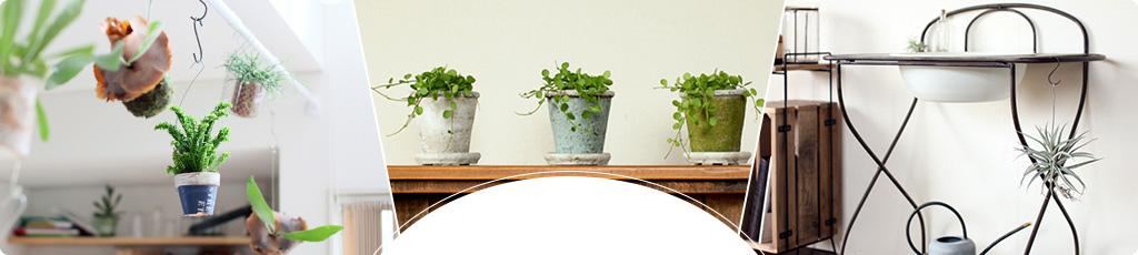 観葉植物の選び方から、飾り方・育て方まで。当店にお任せください。