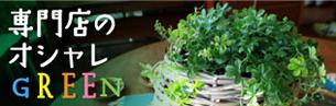 観葉植物一覧