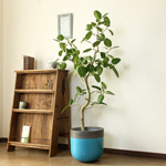 大きめサイズの植木鉢