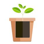 植木鉢の選び方