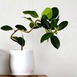 小さめの植木鉢