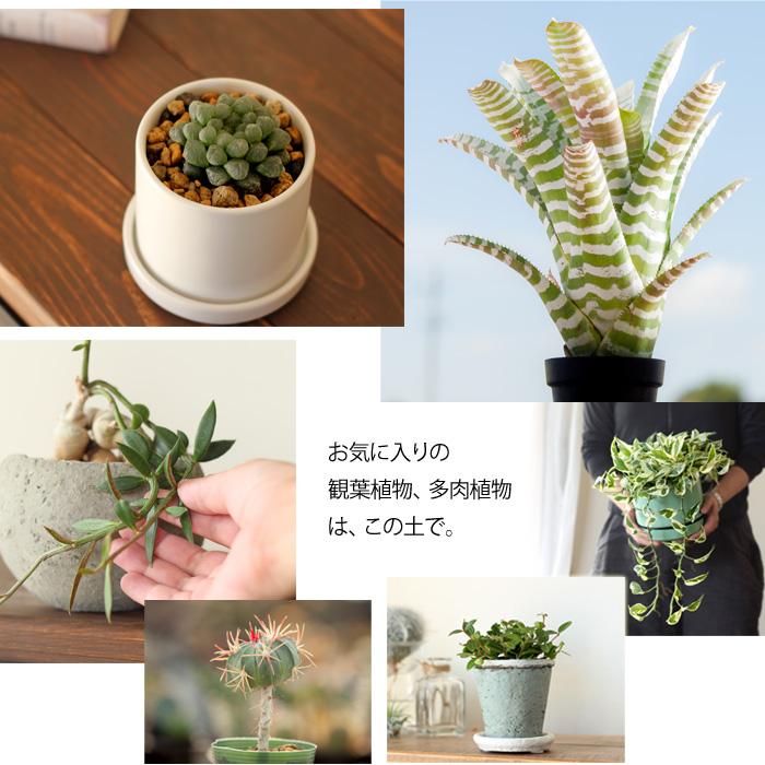土で植物は変わります