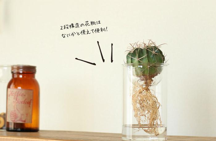 サボテン 花瓶