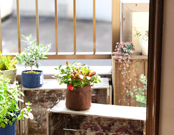 チェッカーベリーをルーツポーチでベランダに飾ったイメージ