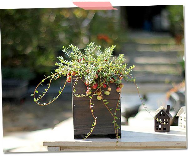 クランベリーを木製鉢に入れたイメージ