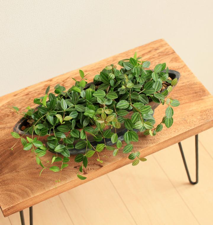 幅広のTVボードに観葉植物