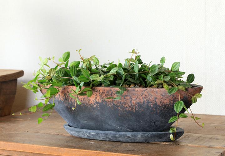 セメントの植木鉢