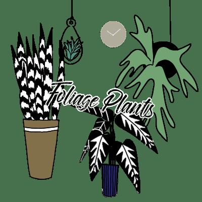 吊り下げ観葉植物