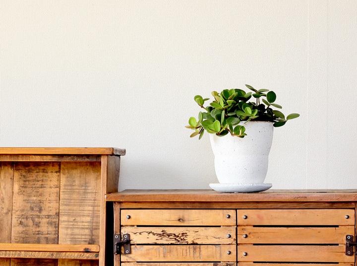 ペペロミア・ホープをマシュマロみたいな植木鉢に植えて