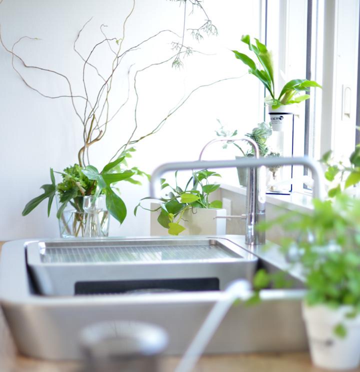 植物がある暮らし