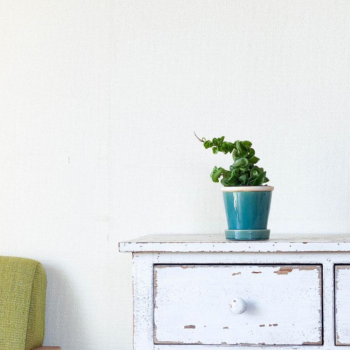 ホヤを陶器鉢に植え替えたイメージ