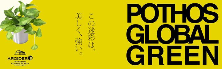 ポトス・新品種