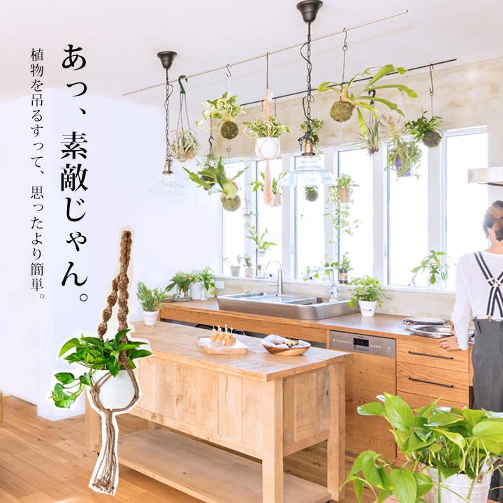 ハンギングの植物