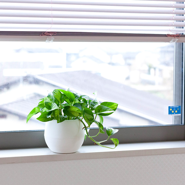 グローバルグリーンを窓辺に