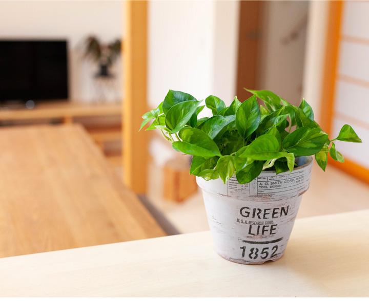 ポトス・グローバルグリーン 白の植木鉢