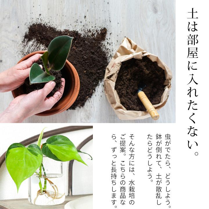 土を使わない水耕栽培