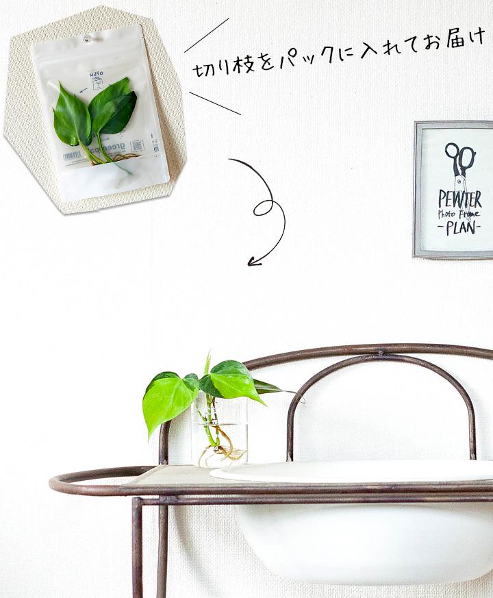 植物をどんな風に飾るか