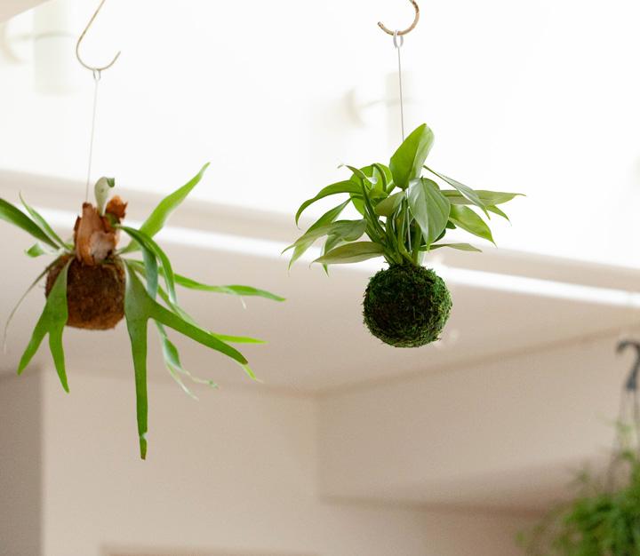 銀メタリックな観葉植物シルバーグリーン