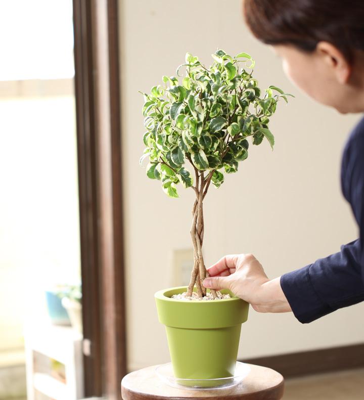 植物に触れる