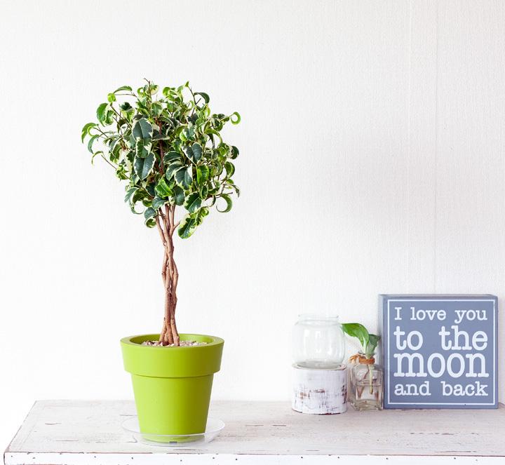 小さなシンボルツリー