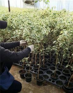 四本の苗を寄せ植え