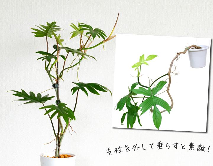 茎が木質化