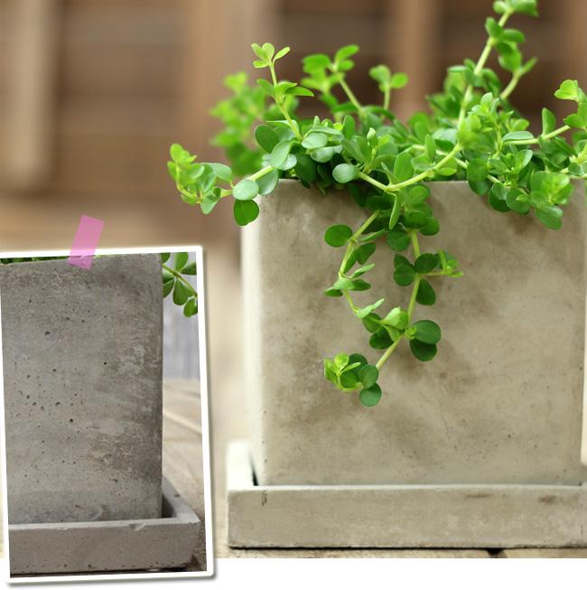 植木鉢鉢の説明