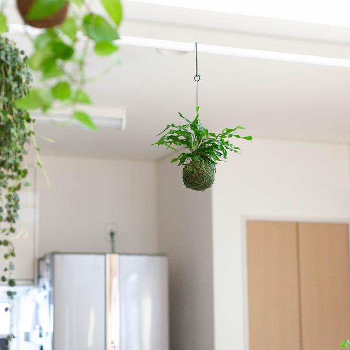 飾りやすい植物