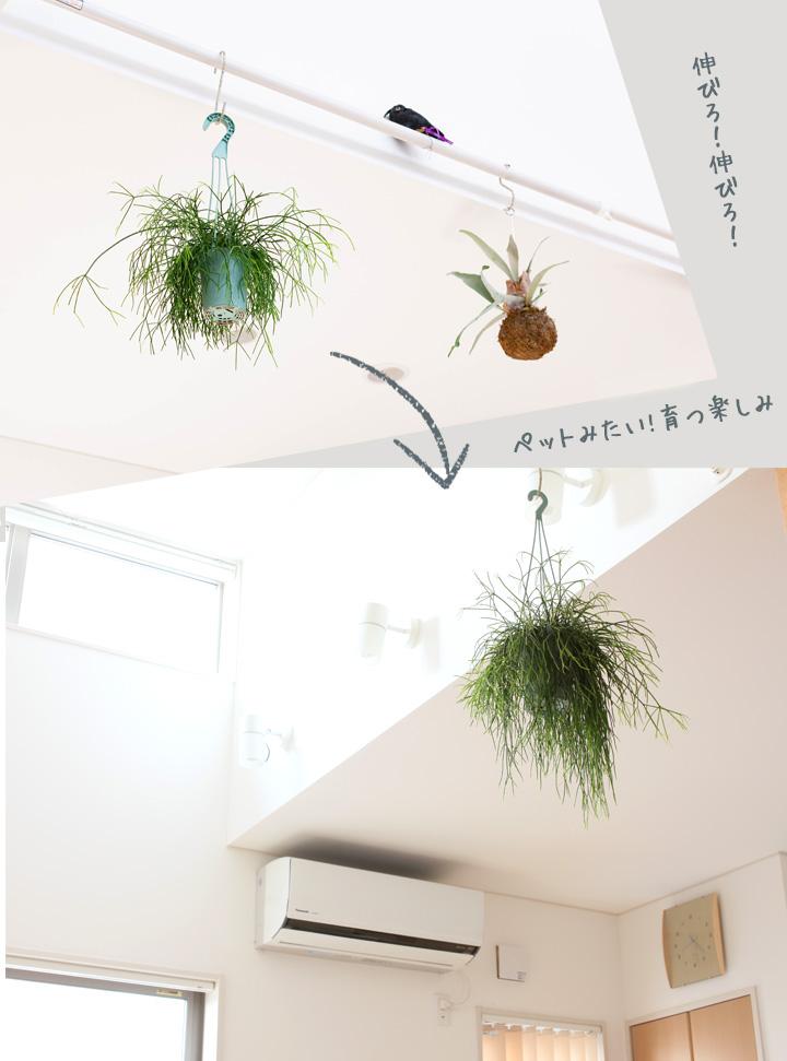 観葉植物がある暮らし
