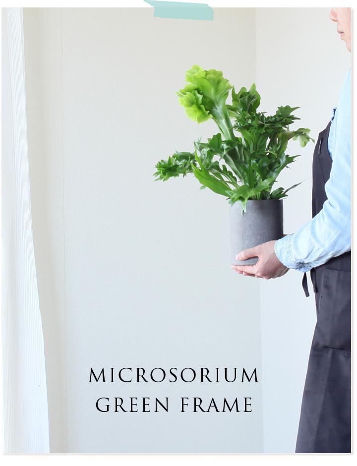 ミクロソリウム