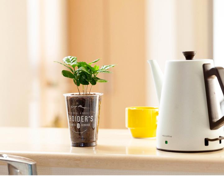 キッチンカウンターにコーヒーの木とポットの写真。