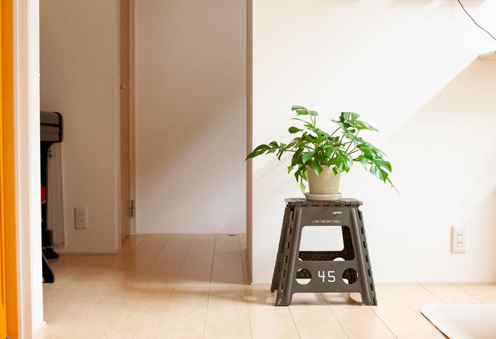 植物 サイズ