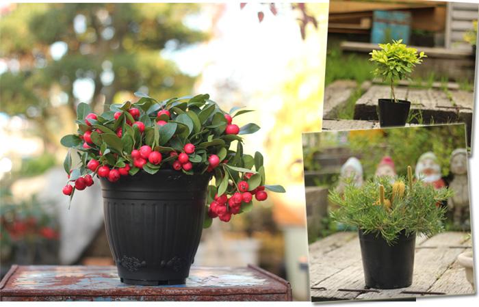 赤 植木鉢