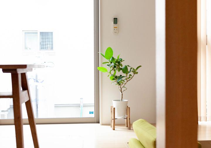 花台にアルテシマゴムを飾ったイメージ