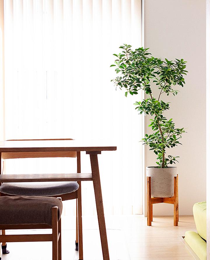 スタンド付の植木鉢