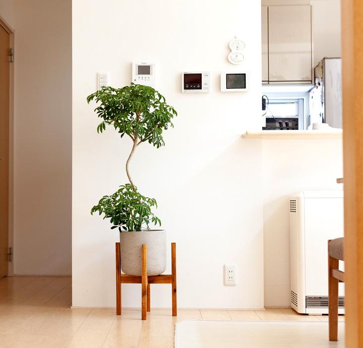 背が高い植物を入れたイメージ