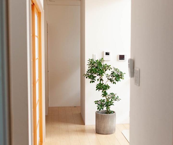 シリンダー型の植木鉢