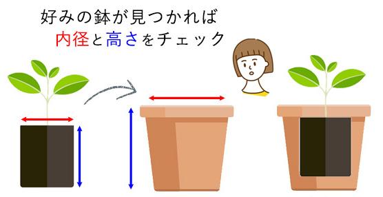 鉢のサイズの測り方