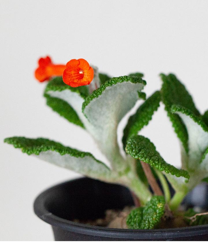 フロリアノポリスの花