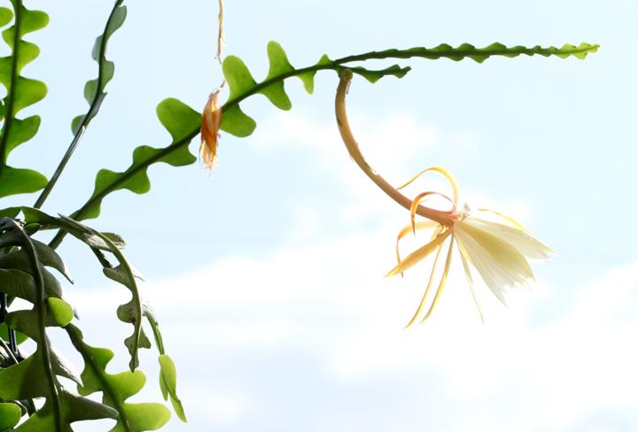 フィッシュボーンの花1