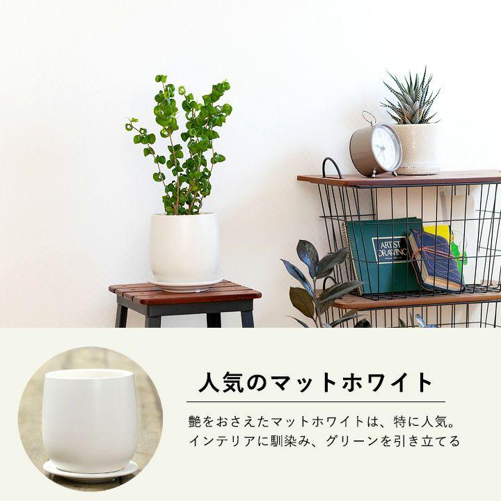 マットホワイトの陶器鉢を使用してます