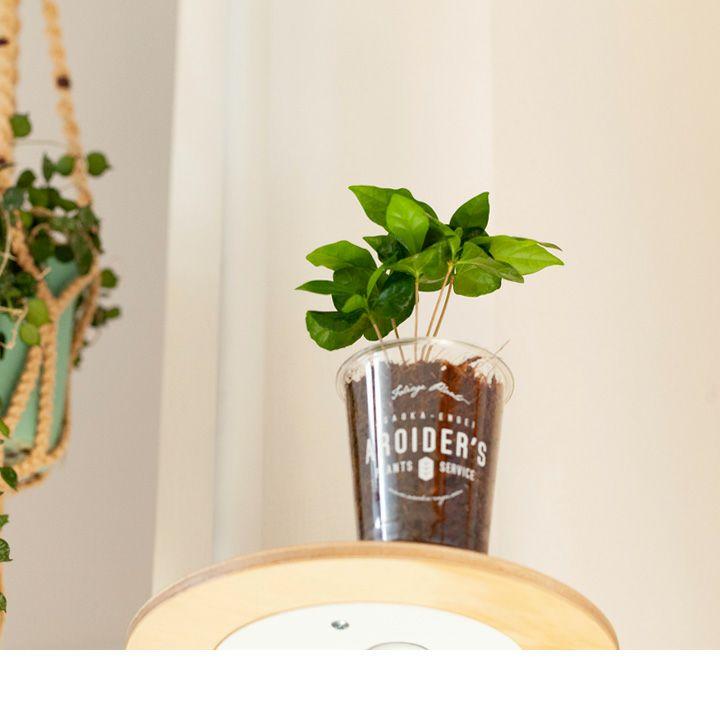 コーヒーの木を見上げた写真