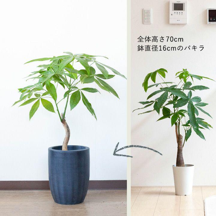 大きめ植木鉢