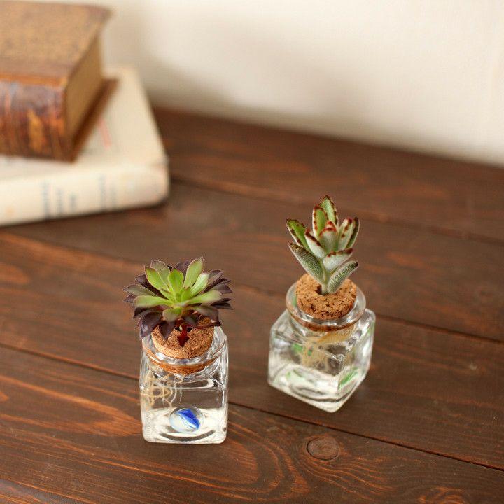 チョコン♪洗面台や、トイレの窓辺にもキュート植物と、根の成長を見守るSTYLEクリスタル多肉植物【品種お任せ2鉢SET】