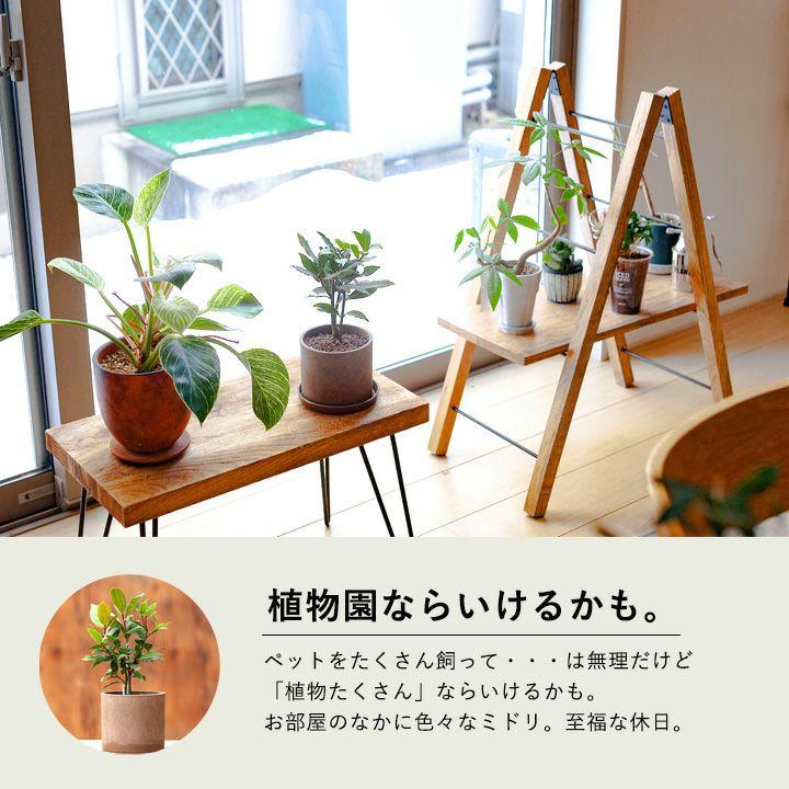部屋に観葉植物を飾ってる写真