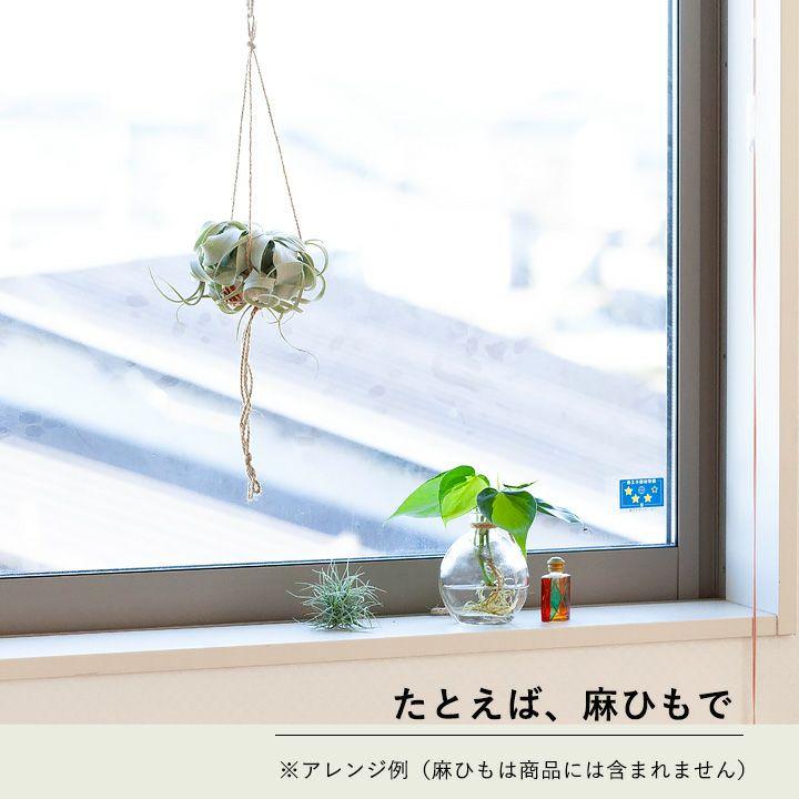 キセログラフィカを麻ヒモで吊るしたイメージ