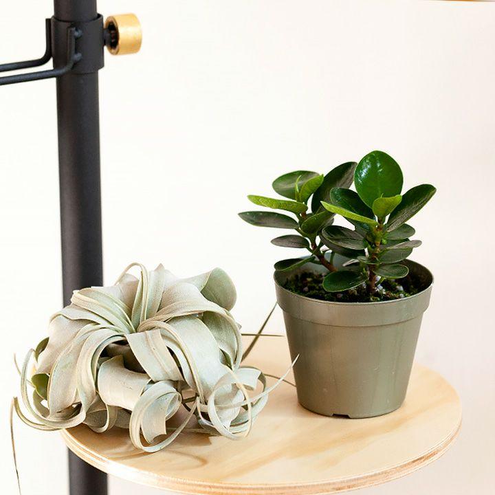 不思議な植物