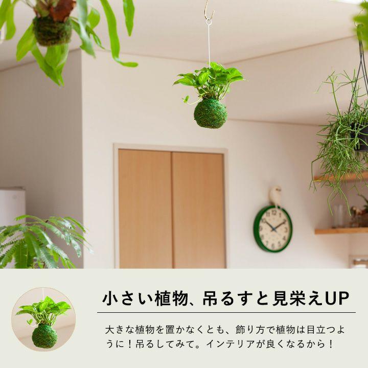 ポトス・グローバルグリーンを部屋に飾ったイメージ