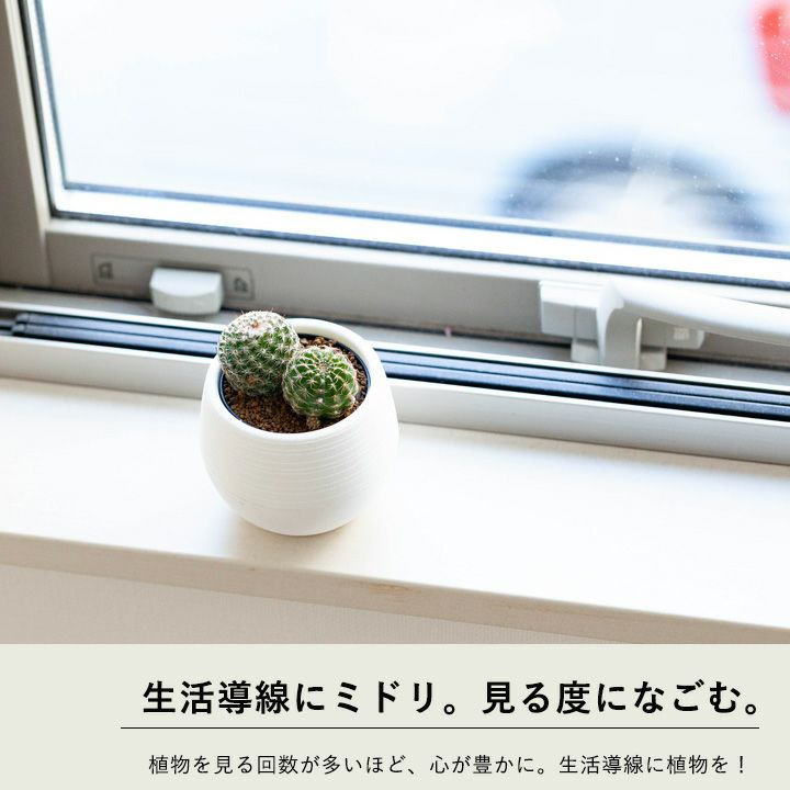 サボテンを窓辺に